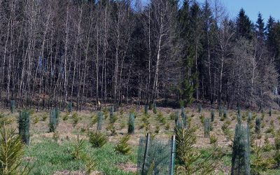 500 Trees Planted
